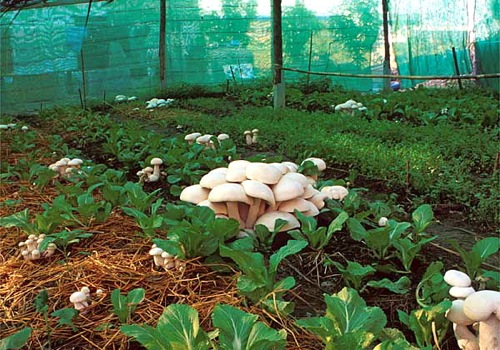 National Workshop on Mushroom Cultivation  (NaWMC-2015).